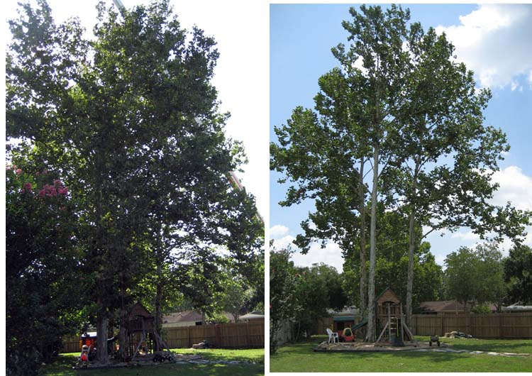 Trees Before and After